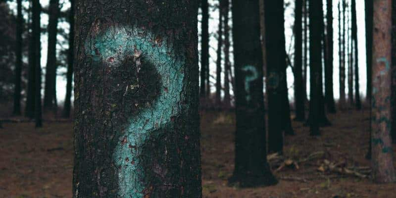 Green Question Marks Painted on Trees